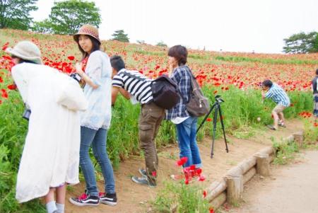 【フォトピクニックレポート】 昭和記念公園 5月20日_c0238457_15185197.jpg