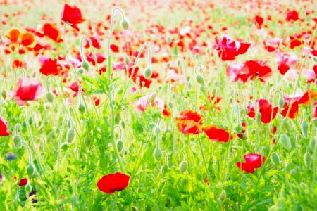 【フォトピクニックレポート】 昭和記念公園 5月20日_c0238457_15215684.jpg