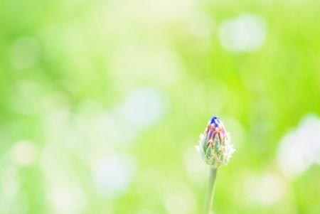 【フォトピクニックレポート】 昭和記念公園 5月20日_c0238457_1573878.jpg