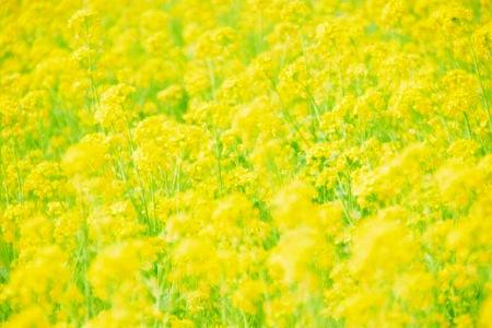 【フォトピクニックレポート】 昭和記念公園 5月20日_c0238457_1591419.jpg