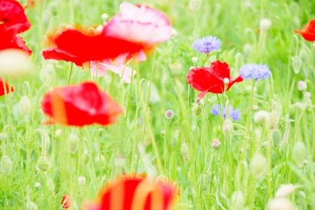 【フォトピクニックレポート】 昭和記念公園 5月20日_c0238457_1710378.jpg