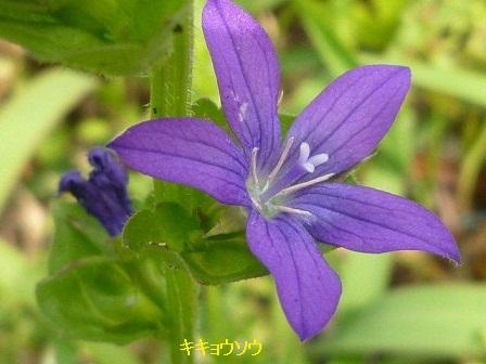 初夏の野草たち_b0175688_15472155.jpg