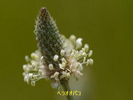 初夏の野草たち_b0175688_15513796.jpg