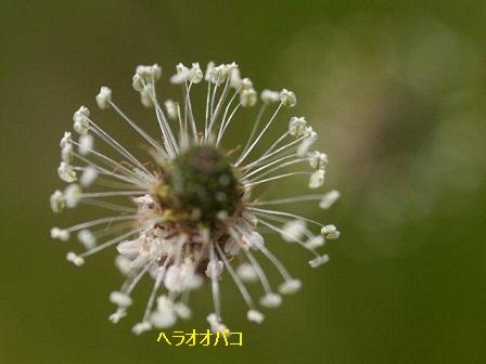 初夏の野草たち_b0175688_15514644.jpg