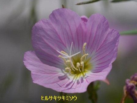 初夏の野草たち_b0175688_15552288.jpg