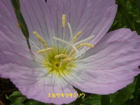 初夏の野草たち_b0175688_15555846.jpg
