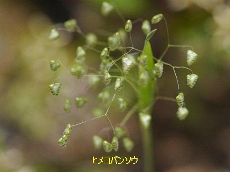 初夏の野草たち_b0175688_160613.jpg
