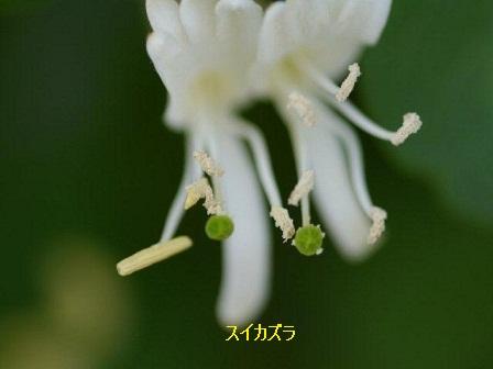 初夏の野草たち_b0175688_16115498.jpg