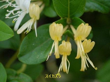初夏の野草たち_b0175688_1613711.jpg