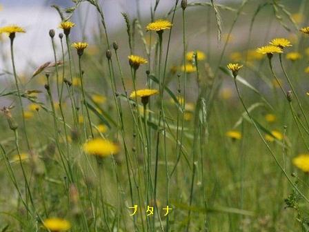 初夏の野草たち_b0175688_1616438.jpg