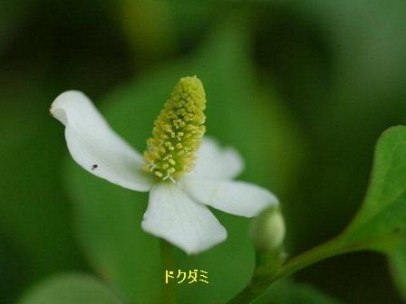 初夏の野草たち_b0175688_16191525.jpg