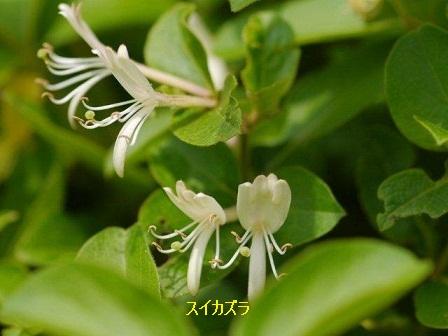 初夏の野草たち_b0175688_1624658.jpg