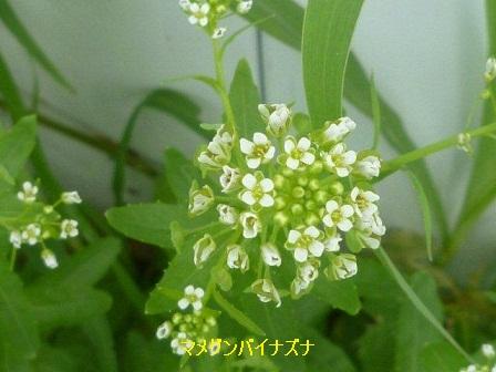 初夏の野草たち_b0175688_1627118.jpg