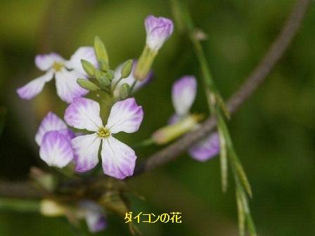 初夏の野草たち_b0175688_16284624.jpg