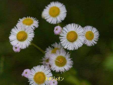 初夏の野草たち_b0175688_1641092.jpg