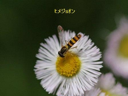 初夏の野草たち_b0175688_1643692.jpg