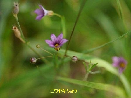 初夏の野草たち_b0175688_1674437.jpg
