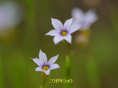初夏の野草たち_b0175688_167879.jpg
