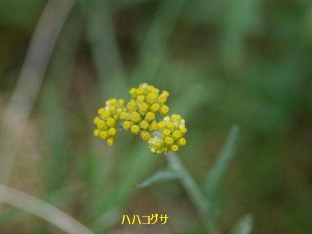 初夏の野草たち_b0175688_1683481.jpg