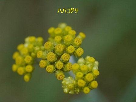 初夏の野草たち_b0175688_1684695.jpg