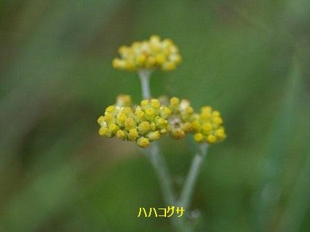 初夏の野草たち_b0175688_169613.jpg