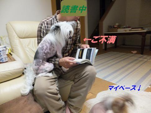 f0179203_1553967.jpg