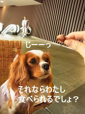 f0214121_9513581.jpg