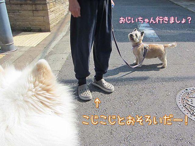 いつもどおりの朝散歩_c0062832_7113964.jpg