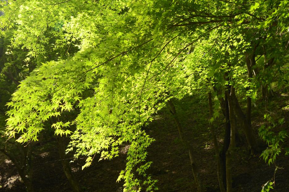 森のリズム_b0194880_182308.jpg