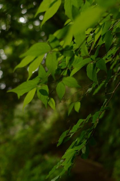 森のリズム_b0194880_18232625.jpg
