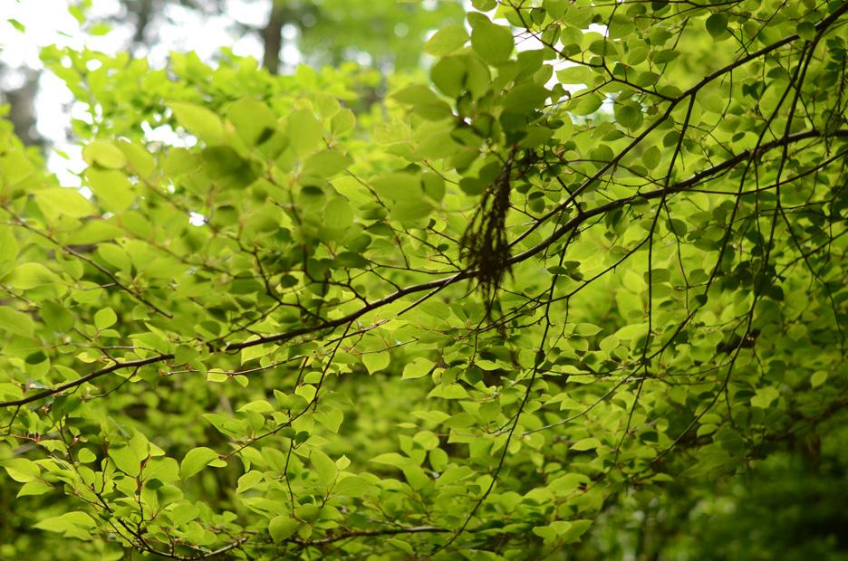 森のリズム_b0194880_18312249.jpg
