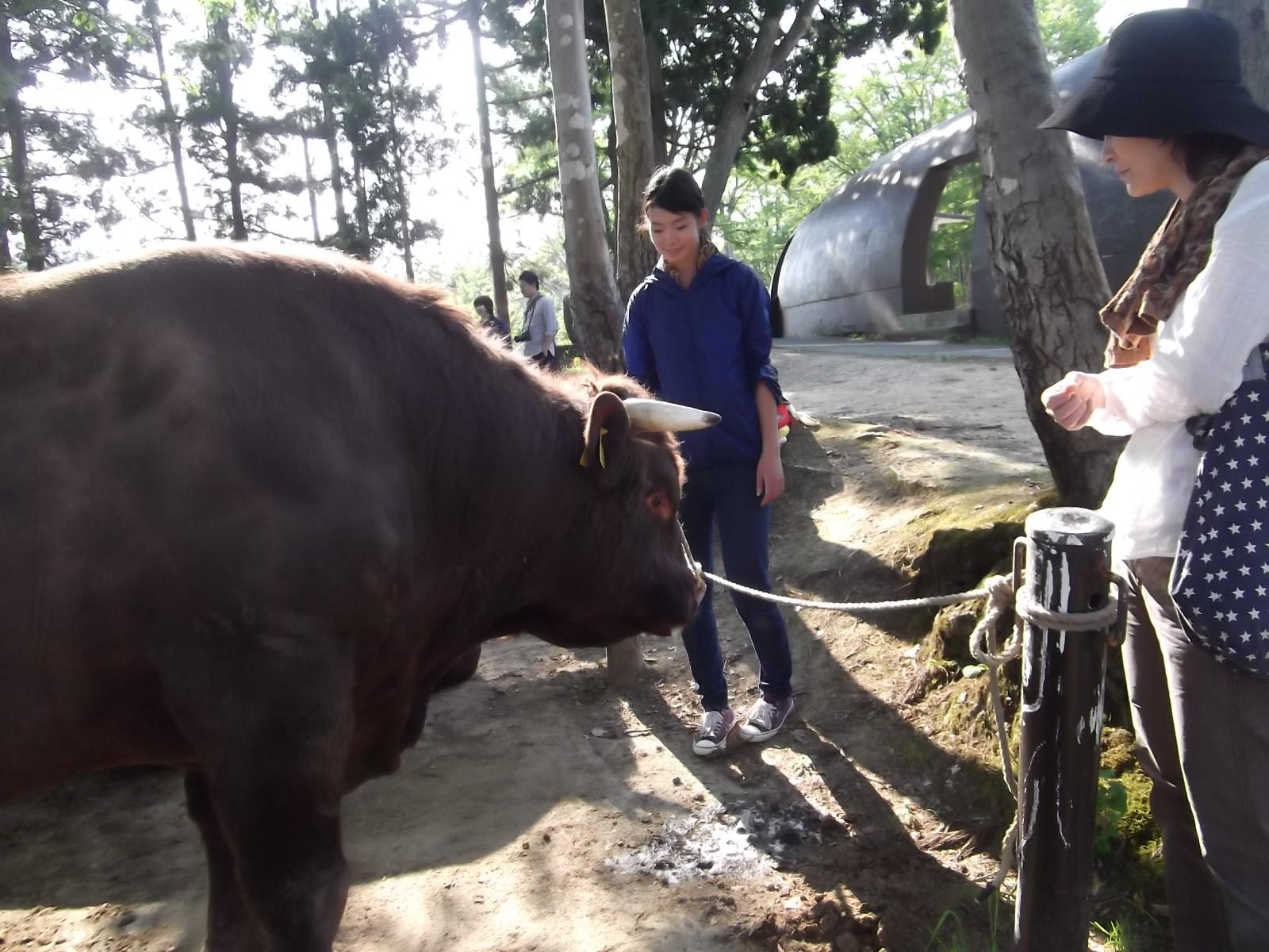 山古志の牛の角突き_a0203003_21244278.jpg