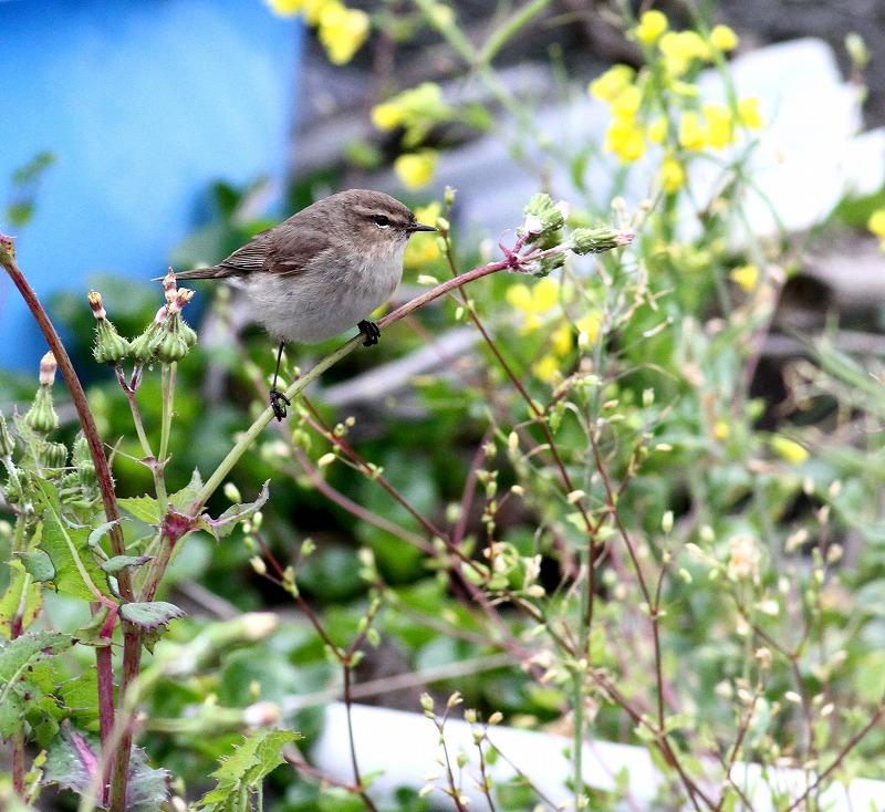 初見の野鳥・・・_c0213607_20571364.jpg