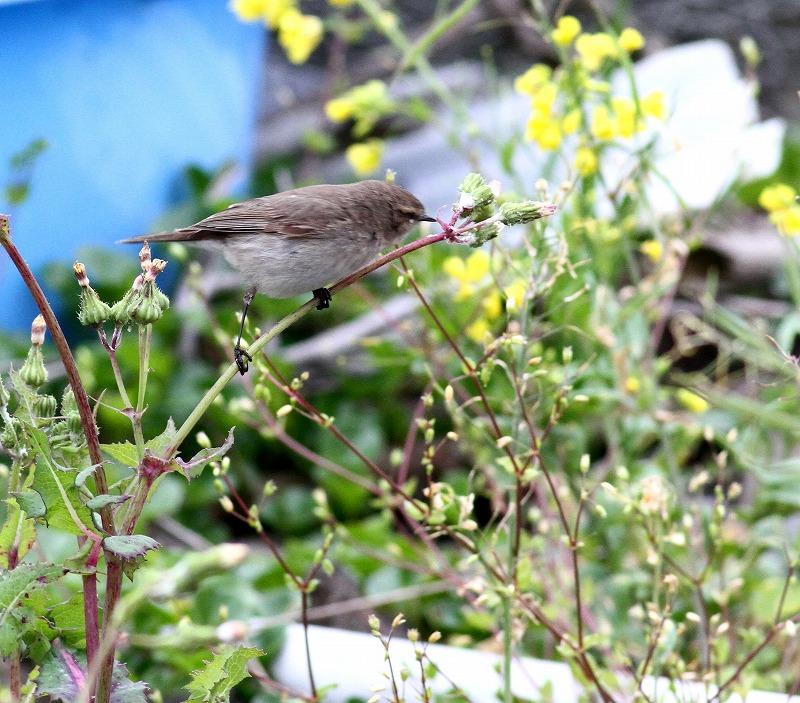 初見の野鳥・・・_c0213607_20571865.jpg