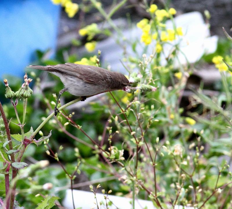初見の野鳥・・・_c0213607_20572348.jpg