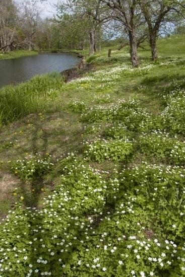 2012年5月27日(日):サクラからスモモへ[中標津町郷土館]_e0062415_18495563.jpg