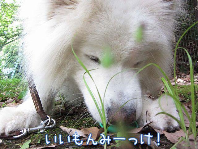 奇跡の日曜日・序曲_c0062832_6263914.jpg