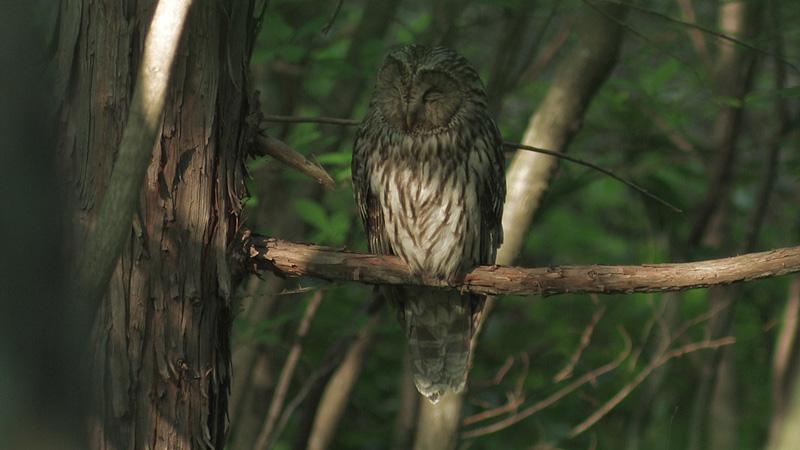 フクロウの森で_a0087133_11231053.jpg