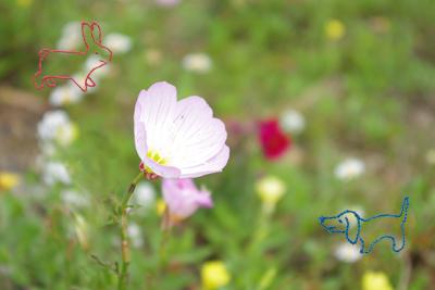 きれいなお花見ーつけた_c0245240_12574926.jpg