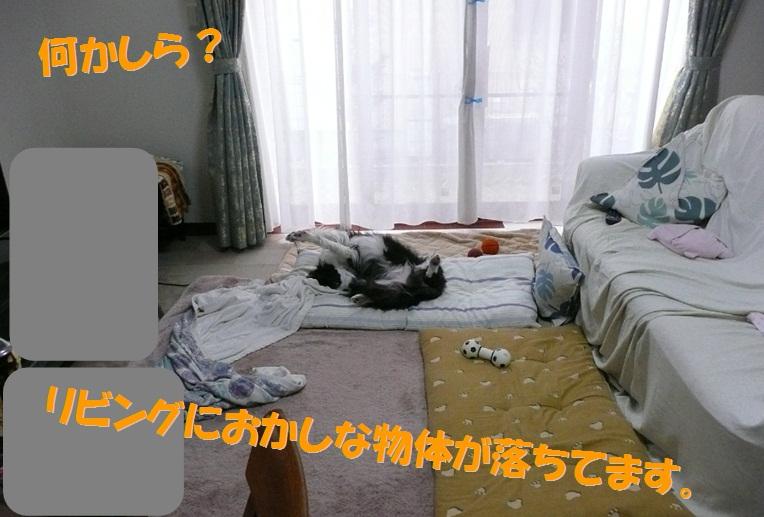 c0147241_2049419.jpg