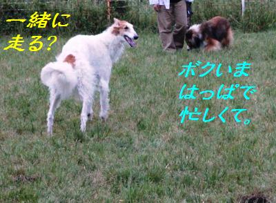 e0195743_21225679.jpg