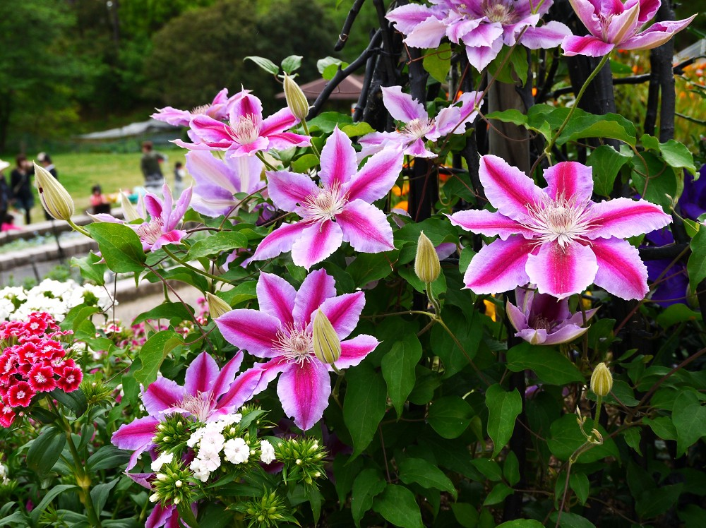 和歌山県植物公園緑花センター _b0093754_1825373.jpg
