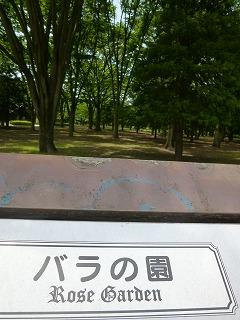 Rose garden   代々木公園♪_a0165160_14422012.jpg