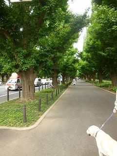 new green leaves  代々木~外苑前♪_a0165160_728313.jpg