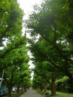 new green leaves  代々木~外苑前♪_a0165160_842524.jpg