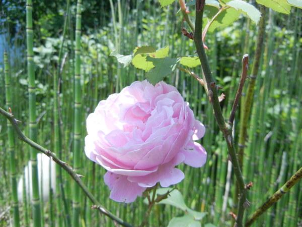 今が見頃のお花♪_e0251361_1335238.jpg
