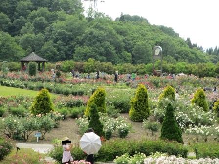 """花フェスタ記念公園""""春のバラまつり""""_a0243064_1534274.jpg"""