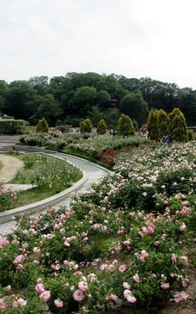 """花フェスタ記念公園""""春のバラまつり""""_a0243064_1543711.jpg"""