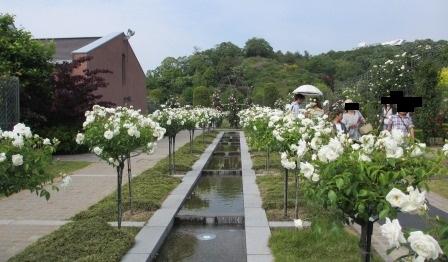 """花フェスタ記念公園""""春のバラまつり""""_a0243064_2172484.jpg"""