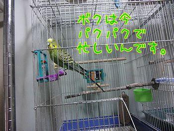 f0196665_0135927.jpg
